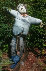 How to Make a Scarecrow for your Open Pollinated / Heirloom Vegetable Garden - St. Clare Heirloom Seeds