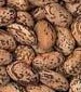 Pinto Bean - St. Clare Heirloom Seeds