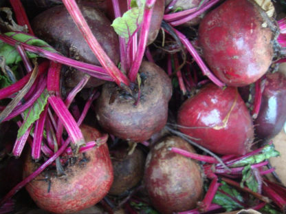 Beet - Detroit Dark Red - St. Clare Heirloom Seeds