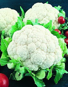 Snowball Y Improved Cauliflower - St. Clare Heirloom Seeds