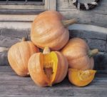 Pumpkin - Amish Pie - St. Clare Heirloom Seeds