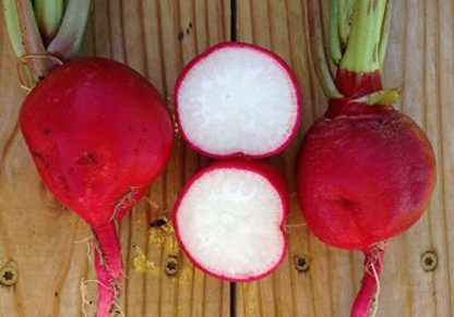 Radish - Crimson Giant - St. Clare Heirloom Seeds