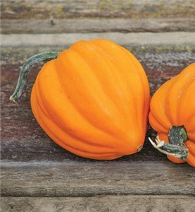 Squash, Winter - Table Gold Acorn - St. Clare Heirloom Seeds