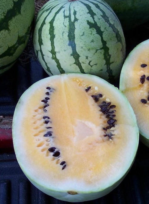Watermelon - Desert King - St. Clare Heirloom Seeds