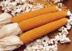 Corn - Lady Finger - St. Clare Heirloom Seeds