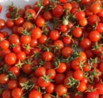 Tomato, Cherry - Tommy Toe - St. Clare Heirloom Seeds