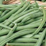 Tendergreen Improved Bean - St. Clare Heirloom Seeds