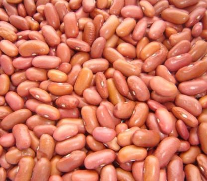 Bean - Light Red Kidney - St. Clare Heirloom Seeds