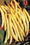 Cherokee Wax Bean - St. Clare Heirloom Seeds