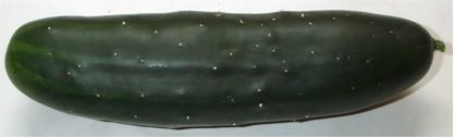 Cucumber - Marketmore 76 - St. Clare Heirloom Seeds
