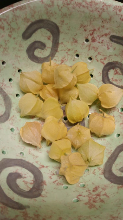 Ground Cherry - Cossack Pineapple - St. Clare Heirloom Seeds - Photo Credit RobynAnne