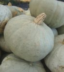Squash, Winter - Sweet Meat - St. Clare Heirloom Seeds