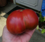 Tomato, Pink and Purple - Cherokee Purple - St. Clare Heirloom Seeds