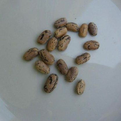Bean, Wax - Dragons Tongue - St. Clare Heirloom Seeds