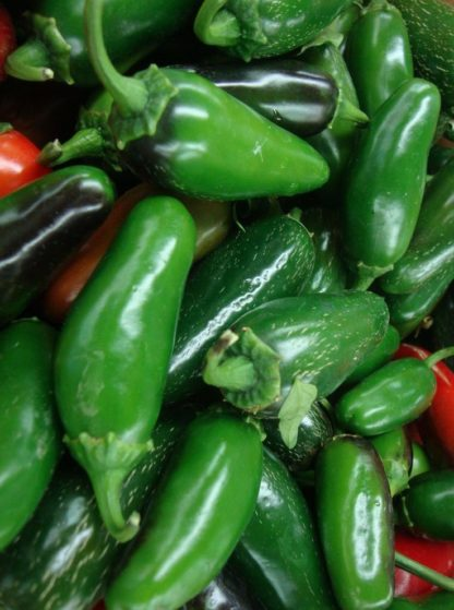 Pepper, Hot - Jalapeno Mid - St. Clare Heirloom Seeds