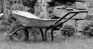 A wheelbarrow is a very popular tool for your heirloom garden. - St. Clare Heirloom Seeds