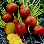 Beet - Golden Detroit - St. Clare Heirloom Seeds